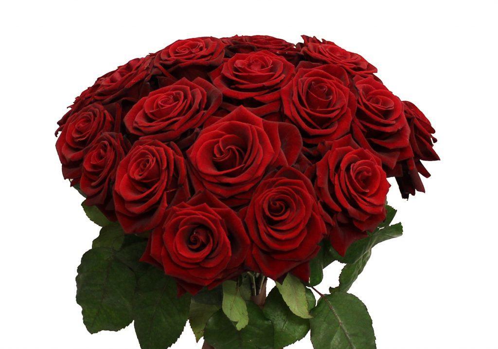 Букет №4 из 25 уральских роз 50 см