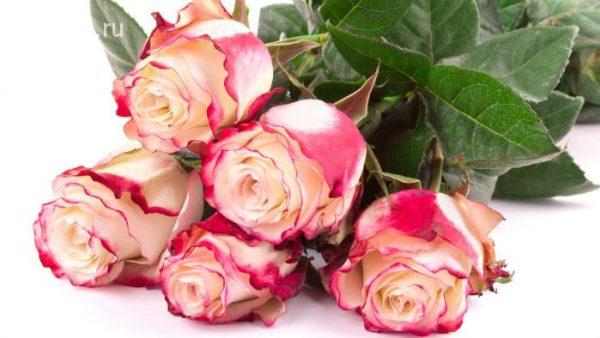 skidka-do-70-na-bukety-gollandskih-roz-v-salone-cvetov-azaliya-podari-svoey-lyubimoy-130908-996-jpg