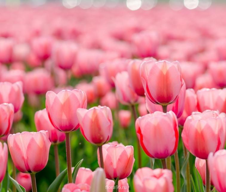 Самые популярные цветы для букетов в подарок